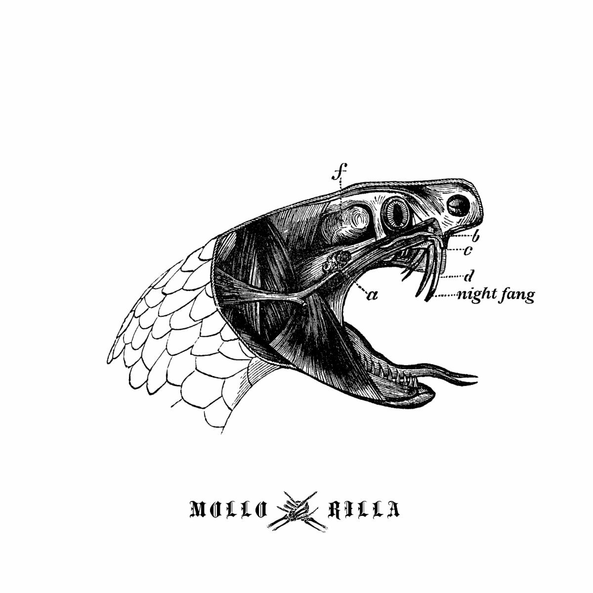 """Ohio Rockers MOLLO RILLA Reveal New Video for """"Night Fang"""" Single"""
